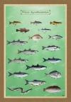 Τα ψάρια των λιμνοθαλασσών μας - Καμβάς
