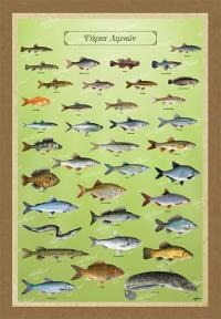 Τα ψάρια των λιμνών μας - Καμβάς