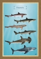 Οι Καρχαρίες - Καμβάς
