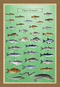 Τα ψάρια των ποταμών μας - Kαμβάς