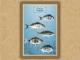 Οικογένεια Σπαριδών (τα ραβδωτά) - Καμβάς