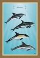 Τα Δελφίνια - Καμβάς